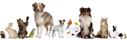 sm devis service animaux
