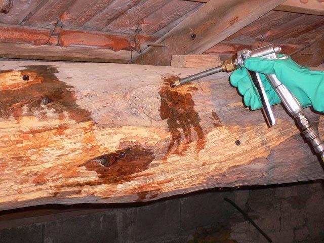 sm devis traitrement termites