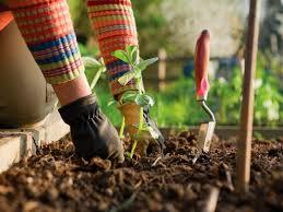sm Devis jardinage Tunisie